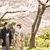 桜のロケーション和装前撮り大阪北摂「服部緑地公園」(色打掛)レポート♡